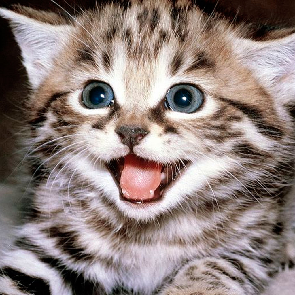 Image of: Funny Animal App Icon Viral Chop Cats Kittens Funny Videos Share Your Video Without Download It